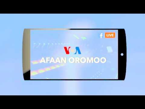 Xxx Mp4 Voa Afaan Oromoo Oduu News Guyyaa Harraa Tuday 2018 3gp Sex