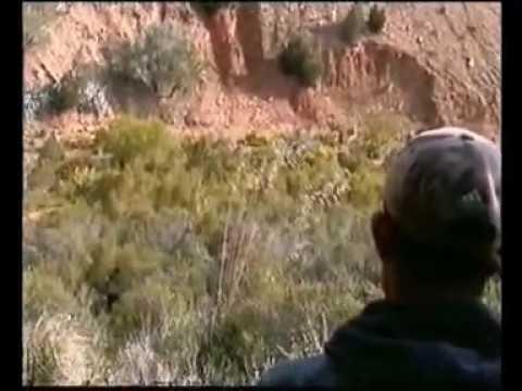 chasse au sanglier en algerie