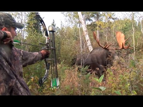 Xxx Mp4 Moose Hunt With Couple Bow And Perfect Shot HD 3gp Sex