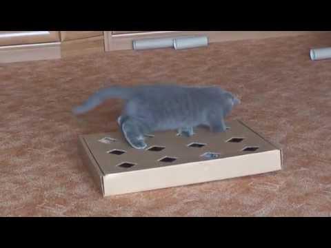 Своими руками игрушка для кота
