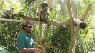 Gan Garoo - Australian Zoo - at Kibbutz Nir David near Beit Shean Israel