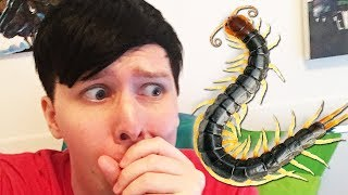 GIANT CENTIPEDE ATTACK