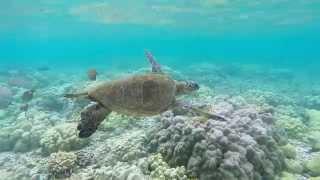 Snorkeling Kahaluu Beach Park
