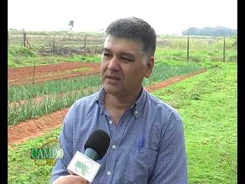 Producción de cebolla como alternativa a productores de hortalizas