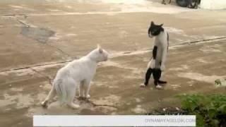 karate ked