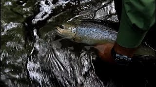 How to Choose a Nymph    Advanced Fly Fishing
