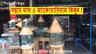 সস্তায় মাছ ও অ্যাকোয়ারিয়াম কিনুন   Buy Cheap Fish And Aquariums From Katabon   Dhaka