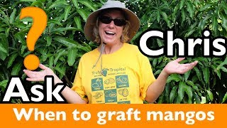 ASK CHRIS- When is the best time to graft mango trees?