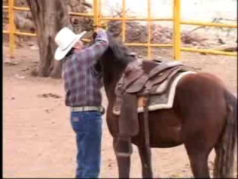 Como amansar caballos sin golpes