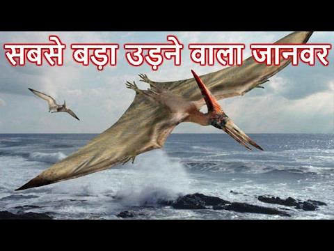 Xxx Mp4 दुनिया का सबसे बड़ा उड़ने वाला जानवर Biggest Flying Bird In The World In Hindi 3gp Sex