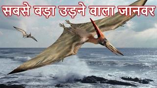 दुनिया का सबसे बड़ा उड़ने वाला जानवर - Biggest Flying Bird in the World in Hindi