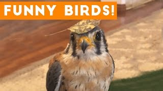 Funny Parrot & Bird Videos Weekly Compilation 2017 | Funny Pet Videos