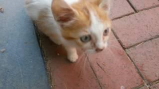 Yavru  kedinin salamını büyük kedilere kaptırtmadık