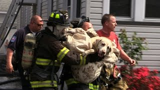Dog Rescued by Firefighters from a House Fire. Caught on Camera! Totowa NJ Fire Dept