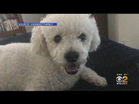 Xxx Mp4 San Dimas Woman Is Hoping Burglars Have Her Dog 3gp Sex
