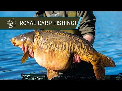 ROYAL CARP FISHING - Simon Crow at Windsor Park!