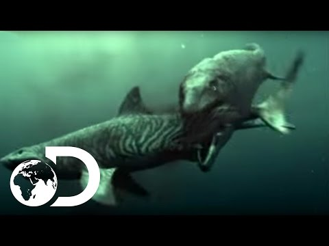Mosasaur Shark Attack Reign of the Dinosaurs