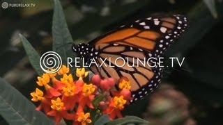 Entspannungsmusik für Kinder - Piano Musik, Klassische Musik, Orchester Musik & Mozart - MOZART4KIDS