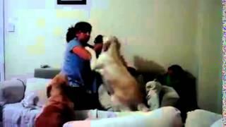 حين ترفض الكلاب عنف البشر  شاهد ردة فعل الكلاب un chien humain
