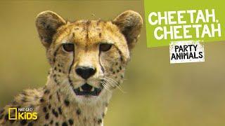 Cheetah, Cheetah | PARTY ANIMALS PLAYLIST