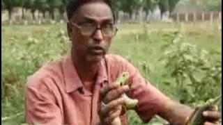 Banglar Krishi 183 (Foler Chara lagano & Sonali Murgi Palon)
