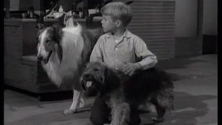 "Lassie - Episode #227 - ""The Blind Dog""- Season 7 Ep. 8 - 10/30/1960"
