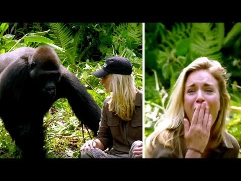 He Raised Gorilla 6 Years Later It Meets His Wife – Despite Warnings She Walks Too Close