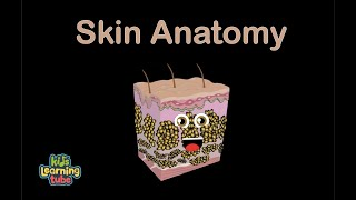 Skin/Skin Song/Human Body for Kids