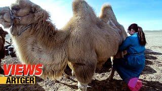 Drinking Camel