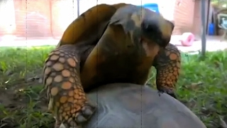 The Amazing Story Of Johnny Evans (Turtle Love & Sex Short Film)