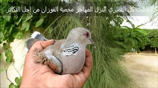 هدية عبيد العوني الى اصدقاء البيئة  طيور  من المحمية