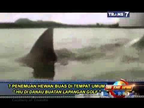 new on the spot  7 penemuan hewan buas di tempat umum dan mengejutkan hiu di danau buatan lapangan g