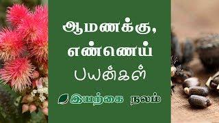 ஆமணக்கு   ஆமணக்கு எண்ணெய்   Amanakku Ennai Payangal