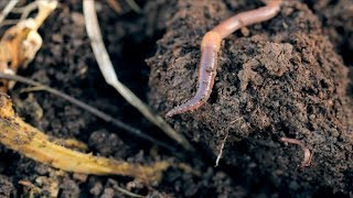 59 Degrees Academy Science: The Life of Worms!