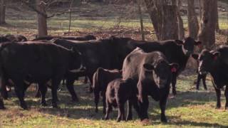 AgDay-Year-to-Date Beef Production Up 5 Percent-9/15/16