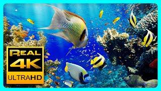 The Best 4K Aquarium for Relaxation II 🐠 Sleep Relax Meditation Music - 2 hours 4K UHD Screensaver