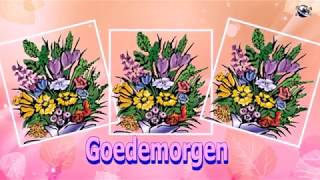 Dutch Language Good Morning Flowers greeting  video  for  everybody everyone