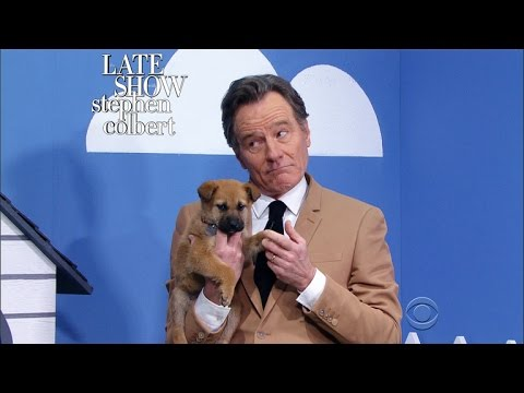 The Late Show Rescue Dog Rescue With Bryan Cranston