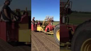 Big Roll harvest