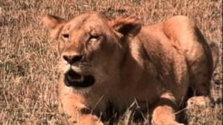 La vie privée des animaux de Patrick Bouchitey - Episode 12