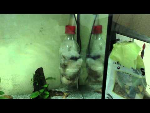 Mon aquarium de 81l avec filtre fait maison