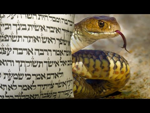 Why did God curse the serpent Rabbi Tovia Singer Explores the Nature of This Seductive Creature