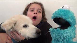 Cookie Monster Attacks Girl Feeds Pet Dog Cookies
