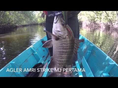 mangrove jack cast freshwater trip