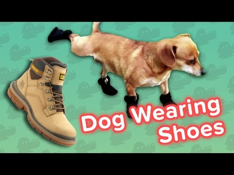 Dogs Wearing Shoes & Thirsty Rabbits Funny Animal Compilation