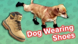 Dogs Wearing Shoes & Thirsty Rabbits! // Funny Animal Compilation