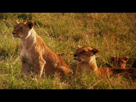 Earth La savana africana
