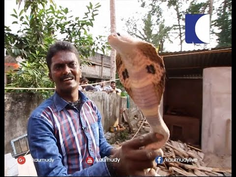 Vava Suresh Catching Dangerous Snake From a Kennel | SNAKE MASTER EP 207 25 11 2016