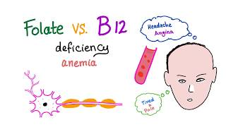 Folate Deficiency Vs Vitamin B12 Deficiency