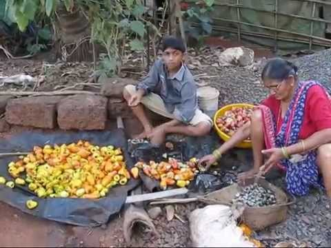 Xxx Mp4 Kaju Cashew Fruit Cashew Nuts Sindhudurg Malvani Kaju Travel Themes 3gp Sex